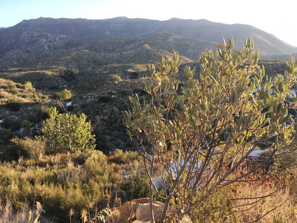 overlooking an opening in the ravine in angeles national forest