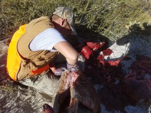 Field dressing my California Mule Deer Buck