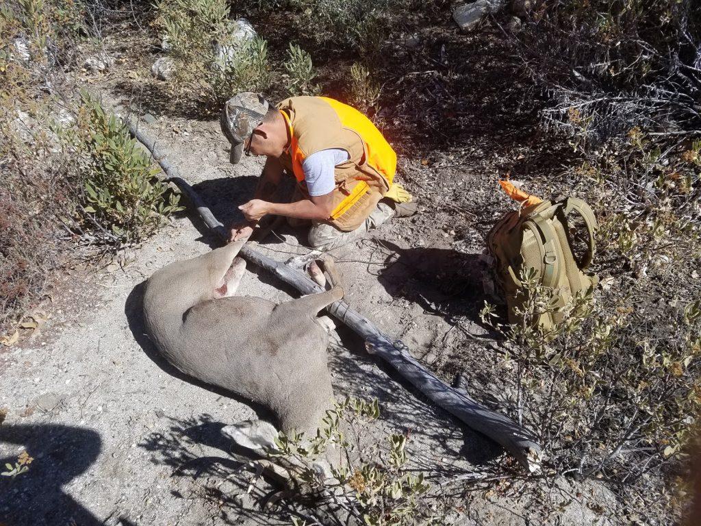 Hog Tying a Mule Deer with 550 Paracord