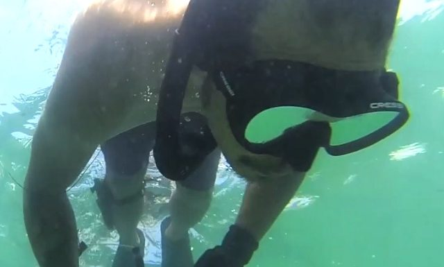 free diver snorkeling