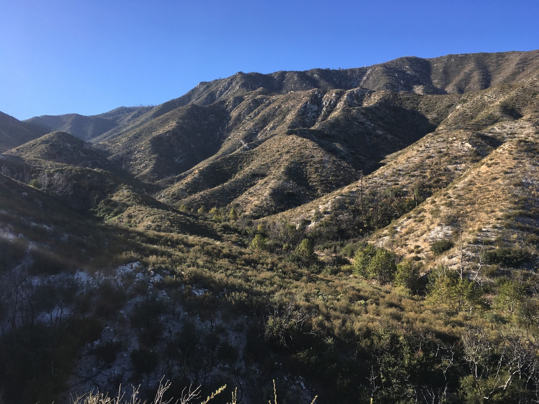 The back of the canyon in Angeles National Forest