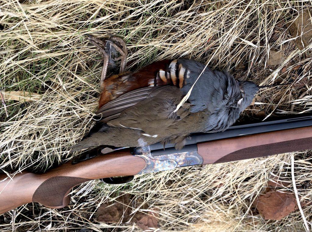 hunting mountain quail in california